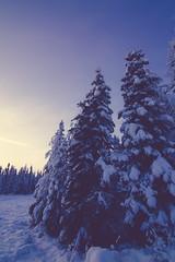Wonder Land (Michelle Myhill) Tags: alaska winter snow snowy landscape trees nature scenic