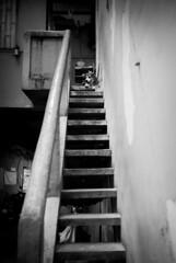 (G.omez) Tags: vietnam monochrome canon animals minimal streetphotography street streetlife locals
