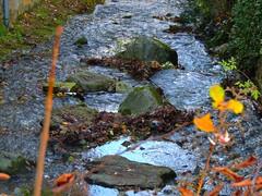 """die Werse im Herbst (Sophia-Fatima) Tags: beckum nrw deutschland werse herbst autumn fluss river """"nikonflickraward"""""""