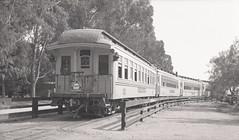 Knott's Berry Farm (jericl cat) Tags: knotts berryfarm train railroad history ghosttown calico railway denver riogrande southern durango express eucalyptus