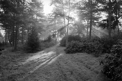 (xbacksteinx) Tags: morning trees light bw mist slr analog forest sunrise 35mm early blackwhite hp woods mood moody 28mm grain grainy sunbeam nikonf3 sunray lightbeam agfaapx100 agfaphoto nikkor28mmf28ai