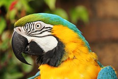 Peckham! (RiverCrouchWalker) Tags: blue bird london gold camden bb macaw peckham