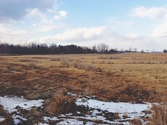 (AnthonyTulliani) Tags: winter snow landscape 5 land barren iphone mobilephotography phoneography iphone5 iphoneography vscocam