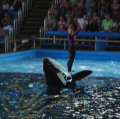 Unna3 (GypsySkye7) Tags: sanantonio believe seaworld shamu killerwhale unna captivity shamurocks