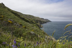 (NutshellPhotography) Tags: bluebells coast raw east cabbage grasses lundy