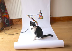 Creating Balance Project - My Dog Sighs Palette Lamp plus his cat (Claire_Sambrook) Tags: max art students cat photography lights design creative anglepoise cameras portsmouth lamps jonas filming mydogsighs universityofportsmouth strongisland creatingbalance creatingbalanceproject