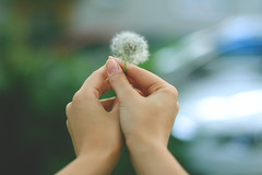 Holding on so gently (Ju Froh) Tags: flower nature photography hands pusteblume jufroh