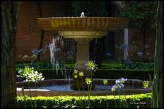 Sueos de la Alhambra (Zapetin) Tags: contraluz fuente alhambra granada