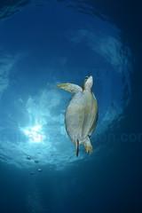 2013 04 METTRA OCEAN INDIEN 0804