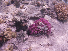 Red sea colours (the_crow_19_78) Tags: colors colours redsea colori marsaalam marrosso