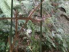 (ddsnet) Tags: bird birds zoo sony hsinchu taiwan      sinpu hsinpu bird zoo zoobird  xperia   xperiaz c6602