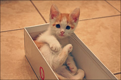 Thor (K. Sawyer Photography) Tags: baby cute animal kitten box adorable foster