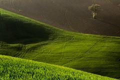 Aprile (francesca guidoni) Tags: marche campagnamarchigiana paesaggiomarchigiano