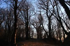 Tramonto invernale nel vecchio castagneto (supersky77) Tags: wood sunset forest tramonto bosque chestnut wald lombardia chestnuttree bosco foresta lombardy lario castanea prealpi castaneasativa castagneto triangololariano castagno solzago