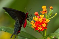 butterfly (gillouvannes56) Tags: light nature canon butterfly landscape bokeh lumière 7d