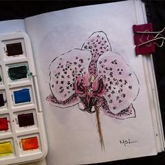 (Marisol Covelo) Tags: flowers urban flower color art nature pencils painting nikon europe sketching pastels colored draw watercolors coloredpencils sketches dibujo lamy oleo lpiz