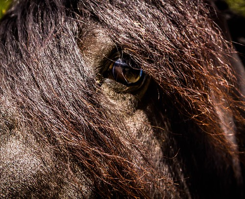 """Pony-Blick • <a style=""""font-size:0.8em;"""" href=""""https://www.flickr.com/photos/91404501@N08/17593467470/"""" target=""""_blank"""">View on Flickr</a>"""