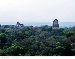 Mayan temples in the rainforest of Tikal National Park in Guatemala (Vincent Demers - vincentphoto.com) Tags: voyage trip travel building history archaeology latinamerica architecture temple ancient rainforest ruins pyramid guatemala unescoworldheritagesite mayan tikal oldbuilding centralamerica petn mayantemple traveldestination tikalnationalpark mayancity