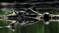 Still Life with Turtles (Keith Michael NYC (4 Million+ Views)) Tags: nyc ny newyork si statenisland mountlorettouniquearea