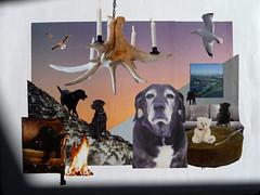 montage / collage # 25 (A. L. Utne) Tags: collage labrador montage labradorretriever allrightsreserved inmemoriam akela liseutne