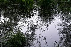 Reflejos (-Instantes- kris) Tags: naturaleza lago agua nikon paisaje espejo reflejos cristinaesteban