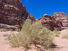 Wadi Rum  /   # 15 (schreibtnix) Tags: reisen travelling naherosten neareast  jordanien jordan  landschaft landscape wste desert wadirum felsen rocks himmel sky blau blue pflanzen plants busch bush olympuse5 schreibtnix