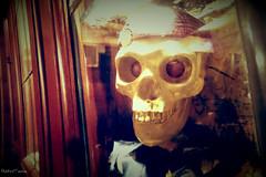 skull IV (VintageReflection) Tags: pirate ship | tivoli copenhagen 2016 retrotwin lostillusion75 kopenhagen schdel totenkopf night decoration dekoration indoor treasure map schatzkarte skeleton bone gold calavera