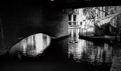 (photo.po) Tags: canong10 monochrome canon canongseries blackandwhitephotography blackandwhite mallards ducks reflection tranquil water riverwalk tx