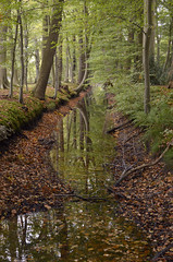 Creekview (JaapFoto) Tags: leaf leaves autumn woods tree water forest nikon d7000 outdoor landscape serene