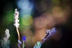 autumn light (ggcphoto) Tags: hello autumn lavender bokeh light