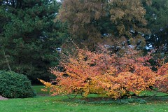 Herbst (toto_26) Tags: stadtpark hamburg germany de natur