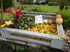 Roadside Fruit Stand (jimmywayne) Tags: hana hanahighway hawaii maui mauicounty fruitstand fruit starfruit