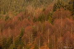 Red Trees in Winter (Serthra) Tags: canoneos5dmarkii canon5dmark2 trees winter red forest detail nature mothernature green tree sunset sundown canada vancouver mountain mountains foliage leaves afternoon sunlight