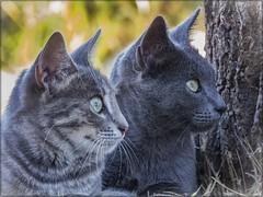 UNA DE GATOS 01 (BLAMANTI) Tags: gatos felinos mascotas