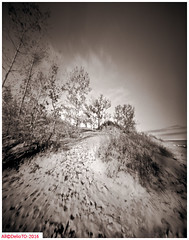 The dunes, hard climbing; well for me that is (DelioTO) Tags: 4x5 adoxchs100 autaut beaches blackwhite canada d23 duotone f175 lake landscape marine natparks november ontario pedwardcounty panoramic pinhole rain rural trip