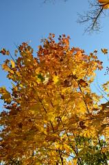 DSC_0135 (florian.glechner) Tags: herbst bume pichlingersee bltter autumn oktober natur farben colors light licht herbstlandschaft farbe herbstfarben trees landscape landschaft see lake himmel heaven wiese grass