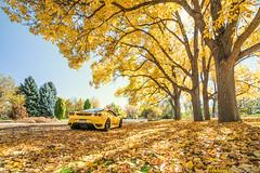RR430_Fall2016_01 (ronnierenaldi.com) Tags: rr430 ferrari f430 ronnierenaldi modified modded car cars exotic exotics auto automotive photography photoshoot yellow supercar prancing horse scud 430 giallo modena adv1 wheels adv1wheels ferrari430 ferrarif430 yellowferrari denverferrari scuderia ferrariscuderia exoticcar