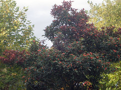 2016_10_190002 (Gwydion M. Williams) Tags: coventry britain greatbritain uk england warwickshire westmidlands autumn