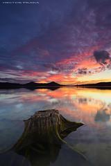 The return (Hector Prada) Tags: atardecer otoño pantano luces arbol cielo sunset autumn lake tree sky