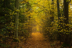 Protected By The Trees (ukasz Babula) Tags: poland autumn fall october forest wood woods tree trees leaves foliage yellow red orange light road trail path nature natural landscape outdoor countryside serene morning calm peaceful nikon d60 nikkor 1855 plant
