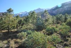(NaomiQYTL) Tags: trekking highatlas atlasmountains pinetrees pine morocco holiday travel