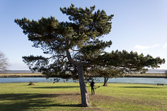 I like this tree (335/366) (AdaMoorePhotography) Tags: nikon d7200 18105mm