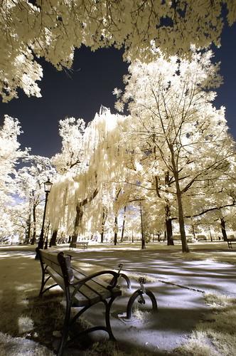 Świebodzice City Park infrared