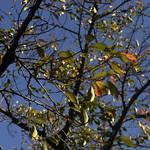 Autumn Leaves 2 thumbnail
