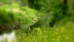 Natur soft, 75282/7612 (roba66) Tags: roba66 landschaft landscape paisaje nature natur naturalezza wiese meadow fields bach texture textur soft efecte leonberg germany deutschland