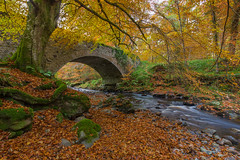 In Cawdor Woods.. (Gordie Broon.) Tags: cawdor woods nairnshire scottishhighlands scotland northeastscotland bridge burn stream autumn november 2016 ecosse escocia alba landscape paysage paisaje trees fall mossyrocks gordiebroonphotography schottland scenery scozia scenic nairn inverness croy walk canon5dmklll canon1635f4l caledonia moray szkocja geotagged leaves old