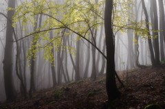 Green in the mist (Gyula Toth) Tags: forest erd mist fog kd hungary trees