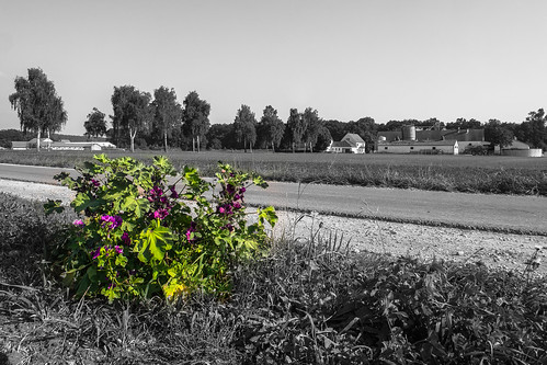 Blumen im Schwalbtal (Colorkey)