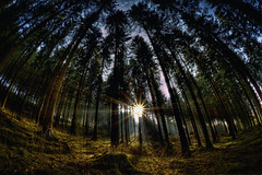sunlight (Dominik Hartmann) Tags: light sun sunlight tree germany deutschland licht forrest fisheye nrw sonne wald bume hdr sonnenstrahlen sauerland sigma10mm nuttlar canon550d dominikhartmann