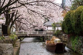 一之船入と桜 / Ichinohunairi Cherry Blossoms